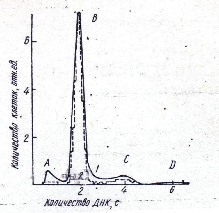 Тимоцит фото